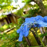 松風園茶室イメージ