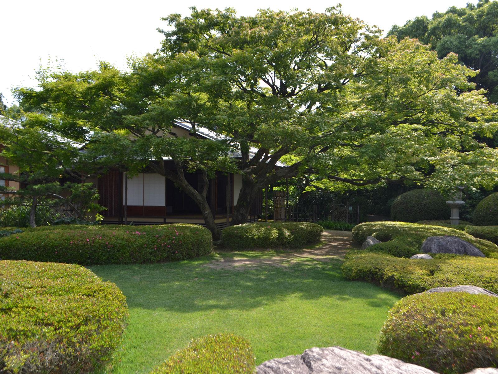 松風園の夏の風景